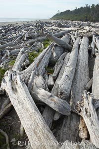 Image 13785, Enormous driftwood logs stack up on the wide flat sand beaches at Kalaloch. Kalaloch, Olympic National Park, Washington, USA, Phillip Colla, all rights reserved worldwide. Keywords: beach, coast, environment, kalaloch, kalaloch beach, landscape, national park, national parks, nature, ocean, olympic, olympic national park, outdoors, outside, pacific, scene, scenery, scenic, sea, seashore, shore, usa, washington.