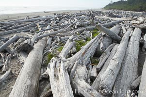 Enormous driftwood logs stack up on the wide flat sand beaches at Kalaloch, Olympic National Park, Washington