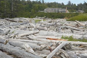 Enormous driftwood logs stack up on the wide flat sand beaches at Kalaloch. Kalaloch, Olympic National Park, Washington, USA, natural history stock photograph, photo id 13787