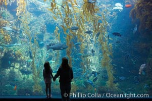 Visitors admire the enormous kelp forest tank in the Stephen Birch Aquarium at the Scripps Institution of Oceanography.  The 70000 gallon tank is home to black seabass, broomtail grouper, garibaldi, moray eels and leopard sharks. Stephen Birch Aquarium, La Jolla, California, USA, natural history stock photograph, photo id 14542
