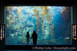 Visitors admire the enormous kelp forest tank in the Stephen Birch Aquarium at the Scripps Institution of Oceanography.  The 70000 gallon tank is home to black seabass, broomtail grouper, garibaldi, moray eels and leopard sharks, La Jolla, California