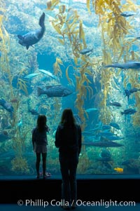 Visitors admire the enormous kelp forest tank in the Stephen Birch Aquarium at the Scripps Institution of Oceanography.  The 70000 gallon tank is home to black seabass, broomtail grouper, garibaldi, moray eels and leopard sharks. La Jolla, California, USA, natural history stock photograph, photo id 14544