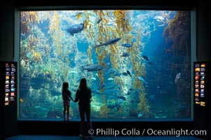Image 14547, Visitors admire the enormous kelp forest tank in the Stephen Birch Aquarium at the Scripps Institution of Oceanography.  The 70000 gallon tank is home to black seabass, broomtail grouper, garibaldi, moray eels and leopard sharks. Stephen Birch Aquarium, La Jolla, California, USA, Phillip Colla, all rights reserved worldwide. Keywords: birch aquarium, california, children, la jolla, people, san diego, scripps institution of oceanography, stephen birch aquarium, tourist, underwater, usa.