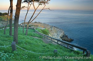 Bluff and trees overlooking the ocean near La Jolla Cove, sunrise. California, USA, natural history stock photograph, photo id 20249