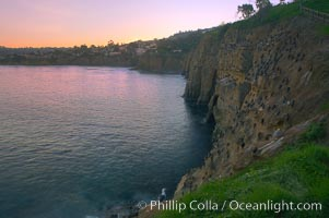 La Jolla Cliffs overlook the ocean with thousands of cormorants, pelicans and gulls resting and preening on the sandstone cliffs.  Sunrise with pink skies. California, USA, natural history stock photograph, photo id 20254