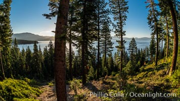 Lake Tahoe viewed through trees, Ridgewood