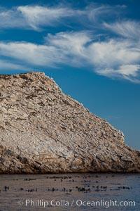 Las Animas island, large bachelor colony of male adult California sea lions in foreground, near La Paz, Sea of Cortez, Baja California, Mexico