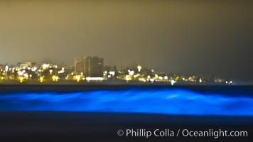Lingulodinium polyedrum red tide dinoflagellate plankton, glows blue when it is agitated in wave and is visible at night. La Jolla, California, USA, Lingulodinium polyedrum, natural history stock photograph, photo id 27068