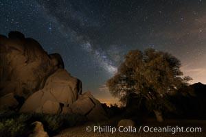 Live Oak and Milky Way, rocks and stars, Joshua Tree National Park at night. Joshua Tree National Park, California, USA, natural history stock photograph, photo id 28419