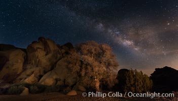 Live Oak and Milky Way, rocks and stars, Joshua Tree National Park at night. Joshua Tree National Park, California, USA, natural history stock photograph, photo id 28423