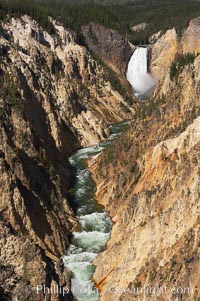The Lower Falls of the Yellowstone River drops 308 feet at the head of the Grand Canyon of the Yellowstone. The canyon is approximately 10,000 years old, 20 miles long, 1000 ft deep, and 2500 ft wide. Its yellow, orange and red-colored walls are due to oxidation of the various iron compounds in the soil, and to a lesser degree, sulfur content. Yellowstone National Park, Wyoming, USA, natural history stock photograph, photo id 13340
