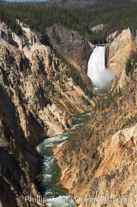 The Lower Falls of the Yellowstone River drops 308 feet at the head of the Grand Canyon of the Yellowstone. The canyon is approximately 10,000 years old, 20 miles long, 1000 ft deep, and 2500 ft wide. Its yellow, orange and red-colored walls are due to oxidation of the various iron compounds in the soil, and to a lesser degree, sulfur content. Yellowstone National Park, Wyoming, USA, natural history stock photograph, photo id 13341