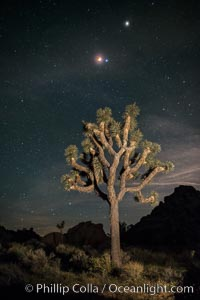 Full lunar eclipse, blood red moon, with blue star Spica (right of moon) and planet Mars (top right), over Joshua Tree National Park, April 14/15, 2014. Joshua Tree National Park, California, USA, natural history stock photograph, photo id 29205