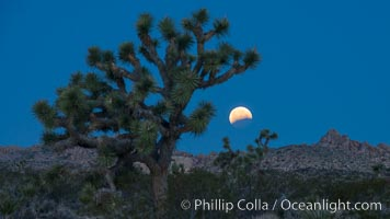 Lunar Eclipse Setting over Joshua Tree National Park, April 4 2015
