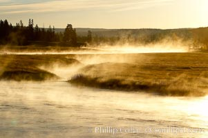 Madison River steaming in the cold air, sunrise, autumn, tall grasses and golden light. Yellowstone National Park, Wyoming, USA, natural history stock photograph, photo id 19591