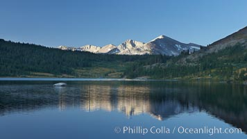 Mammoth Peak rises above a placid Tioga Lake, at sunrise. Tioga Lake, Yosemite National Park, California, USA, natural history stock photograph, photo id 23268