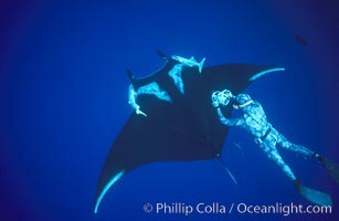 Manta ray and freediving videographer, Isla San Benedicto. San Benedicto Island, Baja California, Mexico, Manta birostris, natural history stock photograph, photo id 04831