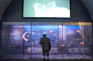 Visitors admire the marine life displays at the Milstein Hall of Ocean Life, American Museum of Natural History, New York City