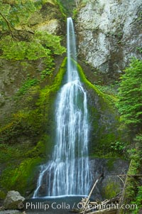 Marymere Falls cascades 90 feet through an old-growth forest of Douglas firs, near Lake Crescent, Olympic National Park, Washington