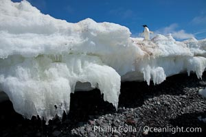 Melting ice along the shore of Paulet Island