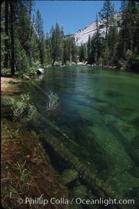 Merced River, Little Yosemite Valley. Yosemite National Park, California, USA, natural history stock photograph, photo id 04623