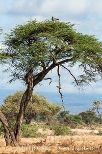 Meru National Park landscape
