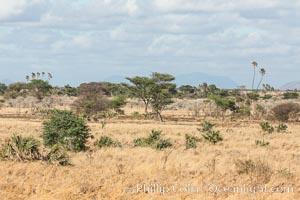 Meru National Park landscape. Meru National Park, Kenya, natural history stock photograph, photo id 29708