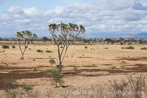 Meru National Park landscape. Meru National Park, Kenya, Hyphaene thebaica, natural history stock photograph, photo id 29711