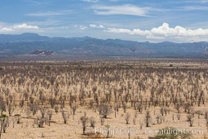Meru National Park landscape. Meru National Park, Kenya, natural history stock photograph, photo id 29735