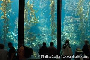 Visitors enjoy the enormous kelp forest tank at the Monterey Bay Aquarium