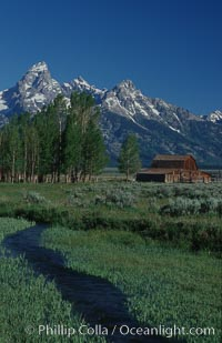 Aspens, a small creek and an old barn along Mormon Row below the Teton Range, Grand Teton National Park, Wyoming