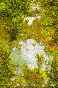 Moss and rocks, Bass Lake, western Sierra