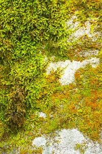 Moss and rocks, Bass Lake, western Sierra. California, USA, natural history stock photograph, photo id 12698