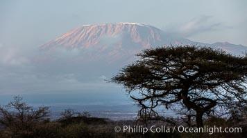 Mount Kilimanjaro, Tanzania, viewed from Amboseli NP, Kenya. Amboseli National Park, Kenya, natural history stock photograph, photo id 29560