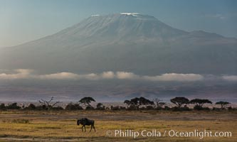 Mount Kilimanjaro, Tanzania, viewed from Amboseli NP, Kenya. Amboseli National Park, Kenya, natural history stock photograph, photo id 29602
