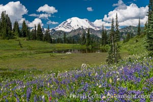 Mount Rainier and alpine wildflowers, Tipsoo Lakes, Mount Rainier National Park, Washington
