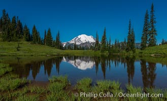 Mount Rainier reflected in Tipsoo Lake, Tipsoo Lakes, Mount Rainier National Park, Washington