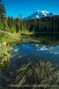 Mount Rainier is reflected in the calm waters of Reflection Lake, early morning. Reflection Lake, Mount Rainier National Park, Washington, USA, natural history stock photograph, photo id 13858