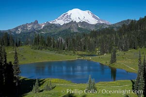 Mount Rainier rises above Lower Tipsoo Lake. Tipsoo Lakes, Mount Rainier National Park, Washington, USA, natural history stock photograph, photo id 13830