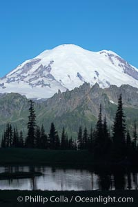 Mount Rainier, Tipsoo Lake, early morning. Tipsoo Lakes, Mount Rainier National Park, Washington, USA, natural history stock photograph, photo id 13831