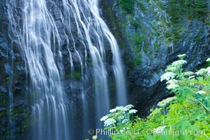 Narada Falls. Mount Rainier National Park, Washington, USA, natural history stock photograph, photo id 13842
