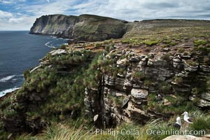 Tall seacliffs overlook the southern Atlantic Ocean, a habitat on which albatross and penguin reside, New Island