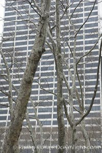 Trees and buildings, winter, Manhattan, New York City