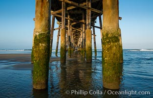 Newport Pier, underneath the pier, pilings and ocean. Newport Beach, California, USA, natural history stock photograph, photo id 28472