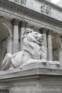 The stone lions Patience and Fortitude guard the entrance to the New York City Public Library. Manhattan, New York City, New York, USA, natural history stock photograph, photo id 11156