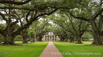 Oak Alley Plantation and its famous shaded tunnel of  300-year-old southern live oak trees (Quercus virginiana).  The plantation is now designated as a National Historic Landmark. Vacherie, Louisiana, USA, natural history stock photograph, photo id 31001