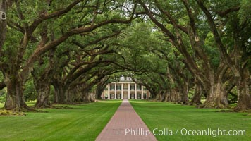 Oak Alley Plantation and its famous shaded tunnel of  300-year-old southern live oak trees (Quercus virginiana).  The plantation is now designated as a National Historic Landmark. Vacherie, Louisiana, USA, natural history stock photograph, photo id 31002