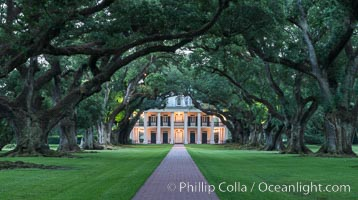 Oak Alley Plantation and its famous shaded tunnel of  300-year-old southern live oak trees (Quercus virginiana).  The plantation is now designated as a National Historic Landmark. Oak Alley Plantation, Vacherie, Louisiana, USA, natural history stock photograph, photo id 31008