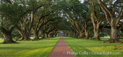 Image 31015, Oak Alley Plantation and its famous shaded tunnel of  300-year-old southern live oak trees (Quercus virginiana).  The plantation is now designated as a National Historic Landmark. Oak Alley Plantation, Vacherie, Louisiana, USA