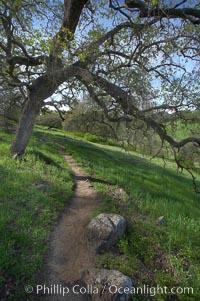 Oak tree and dirt walking path. Santa Rosa Plateau Ecological Reserve, Murrieta, California, USA, natural history stock photograph, photo id 20531